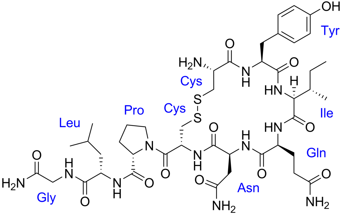 1200px-Oxytocin_with_labels